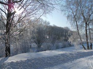 zima v januari 2011 008